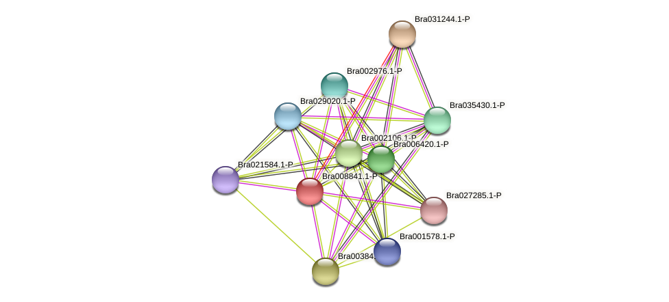 Bra008841 protein (Brassica rapa) - STRING interaction network
