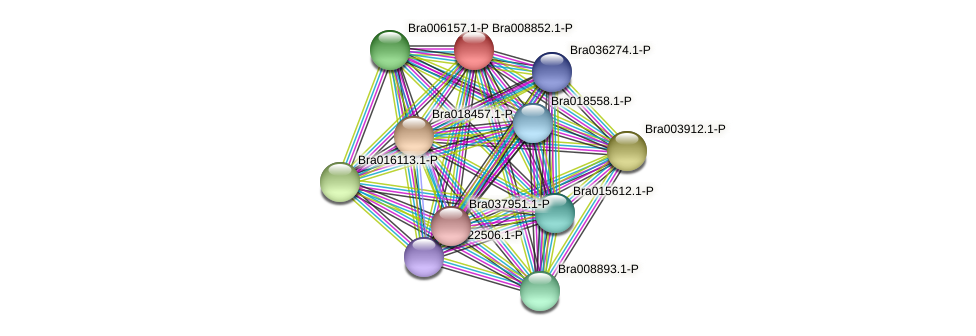 Bra008852 protein (Brassica rapa) - STRING interaction network