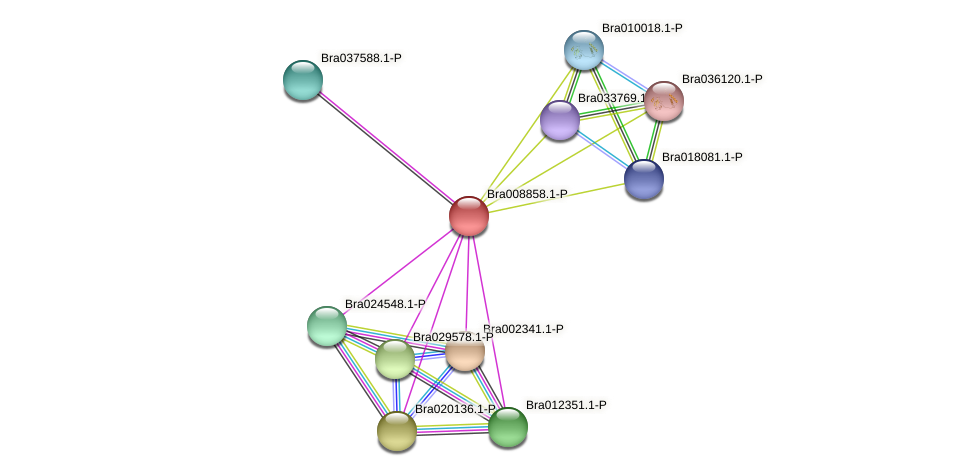 Bra008858 protein (Brassica rapa) - STRING interaction network