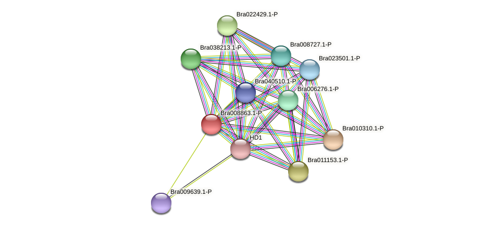 Bra008863 protein (Brassica rapa) - STRING interaction network