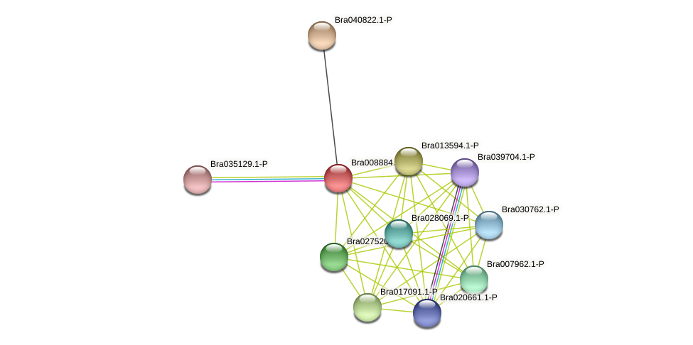 Bra008884 protein (Brassica rapa) - STRING interaction network