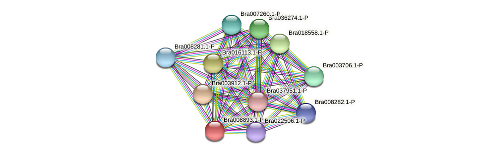 Bra008893 protein (Brassica rapa) - STRING interaction network