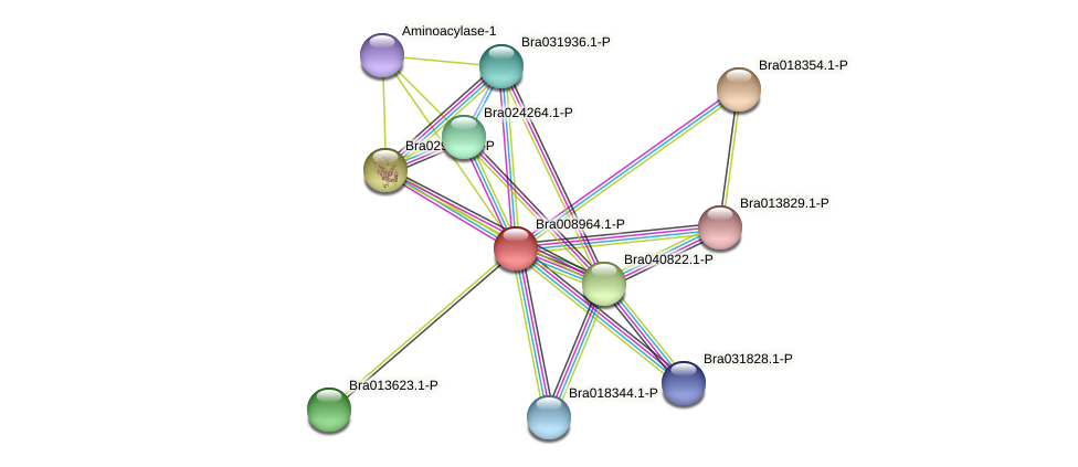 Bra008964 protein (Brassica rapa) - STRING interaction network