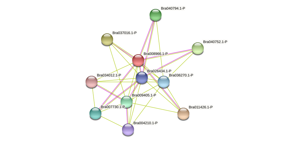 Bra008966 protein (Brassica rapa) - STRING interaction network