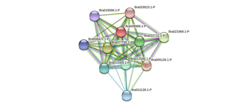 Bra008986 protein (Brassica rapa) - STRING interaction network