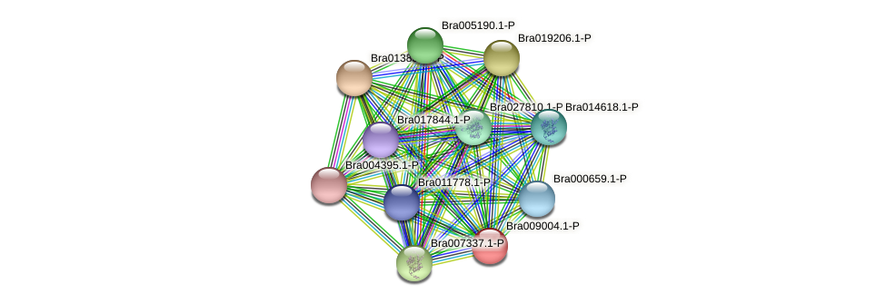 Bra009004 protein (Brassica rapa) - STRING interaction network