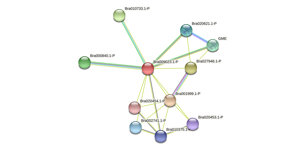 Bra009023 protein (Brassica rapa) - STRING interaction network