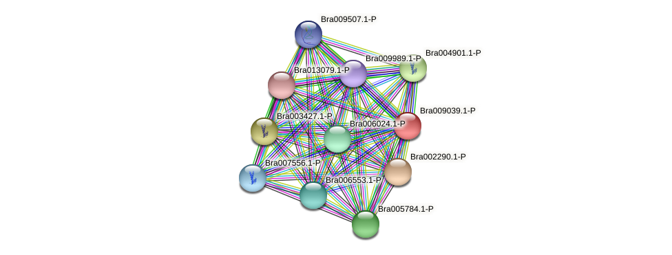 Bra009039 protein (Brassica rapa) - STRING interaction network
