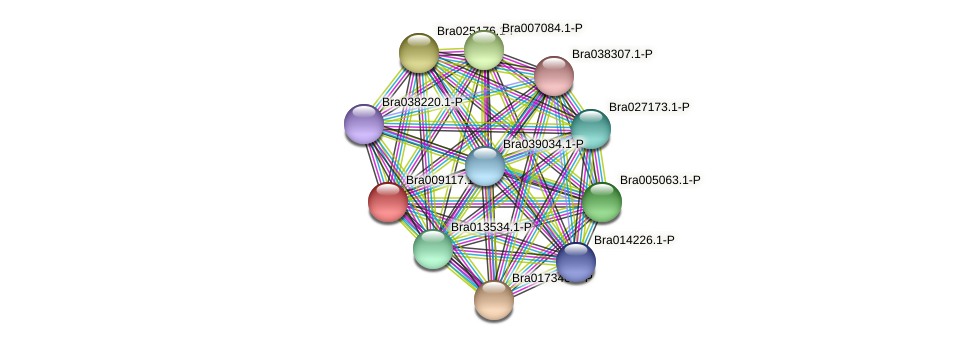 Bra009117 protein (Brassica rapa) - STRING interaction network