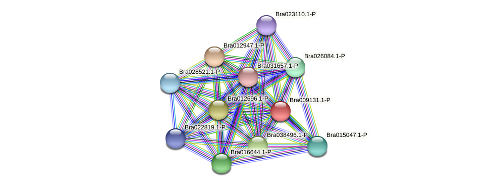 Bra009131 protein (Brassica rapa) - STRING interaction network