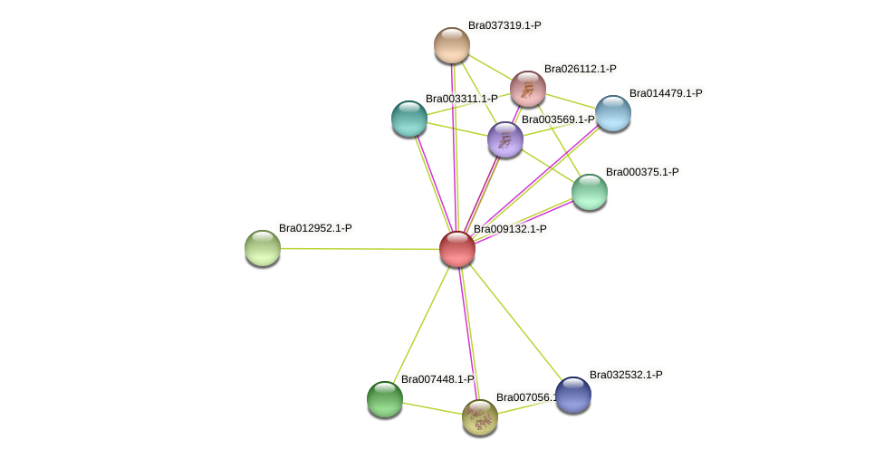 Bra009132 protein (Brassica rapa) - STRING interaction network