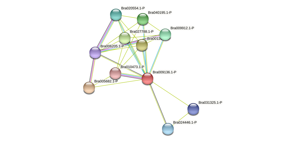 Bra009136 protein (Brassica rapa) - STRING interaction network
