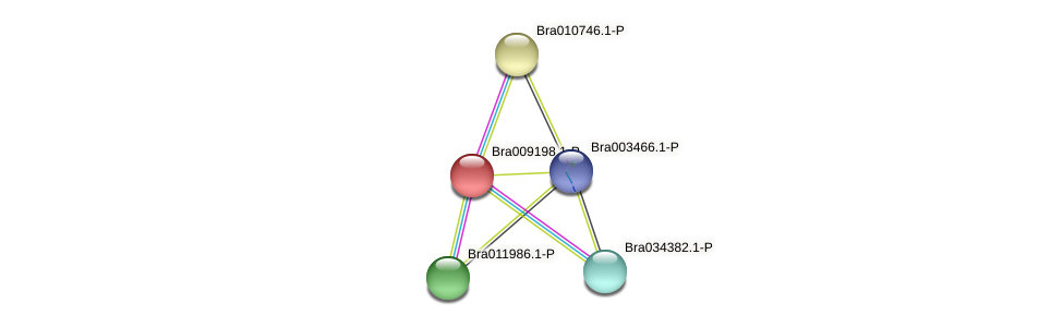 Bra009198 protein (Brassica rapa) - STRING interaction network