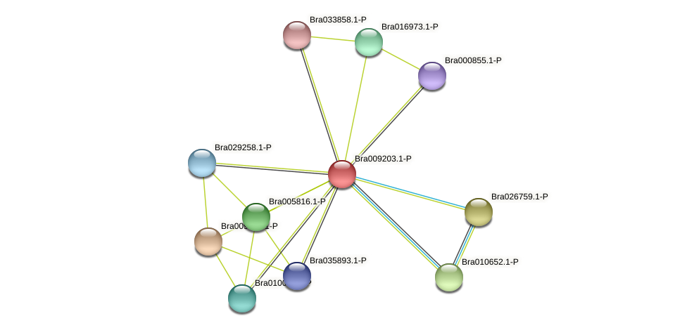 Bra009203 protein (Brassica rapa) - STRING interaction network