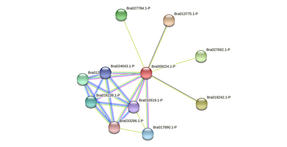 Bra009224 protein (Brassica rapa) - STRING interaction network