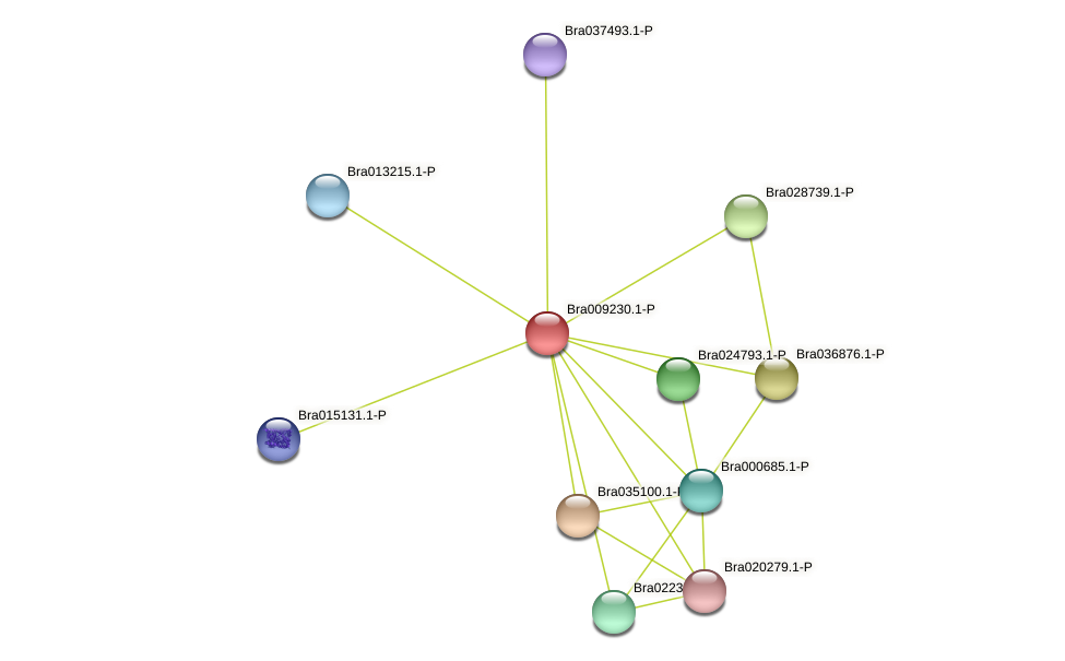 Bra009230 protein (Brassica rapa) - STRING interaction network