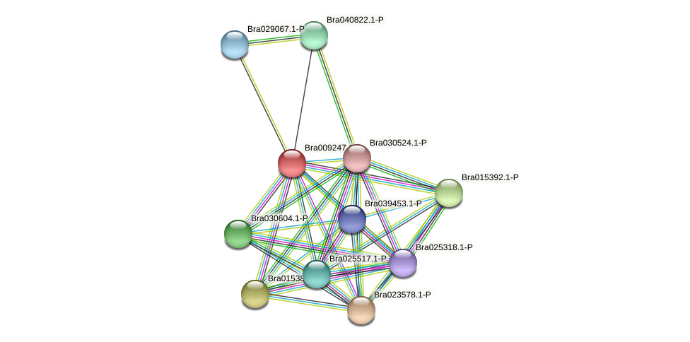 Bra009247 protein (Brassica rapa) - STRING interaction network