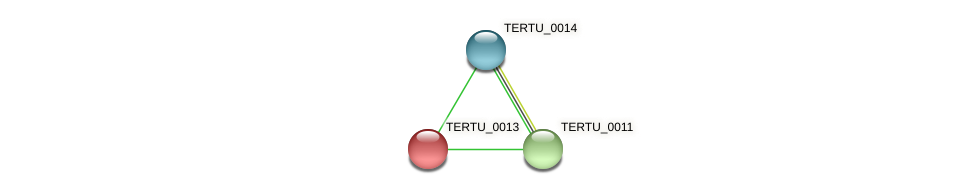 TERTU_0013 protein (Teredinibacter turnerae) - STRING interaction network