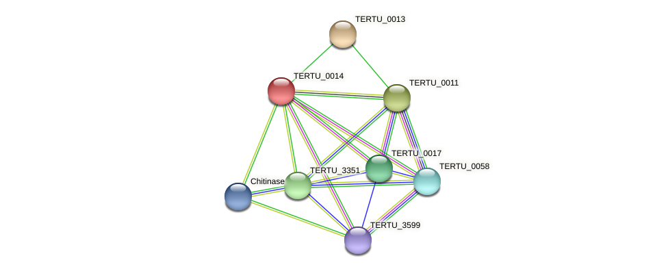 TERTU_0014 protein (Teredinibacter turnerae) - STRING interaction network
