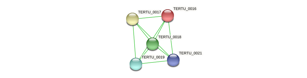 TERTU_0016 protein (Teredinibacter turnerae) - STRING interaction network