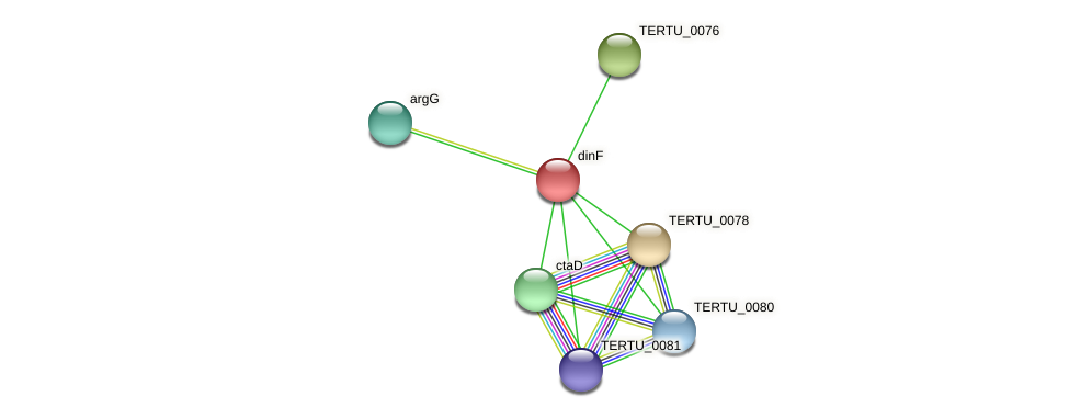dinF protein (Teredinibacter turnerae) - STRING interaction network