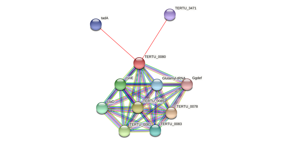 TERTU_0080 protein (Teredinibacter turnerae) - STRING interaction network