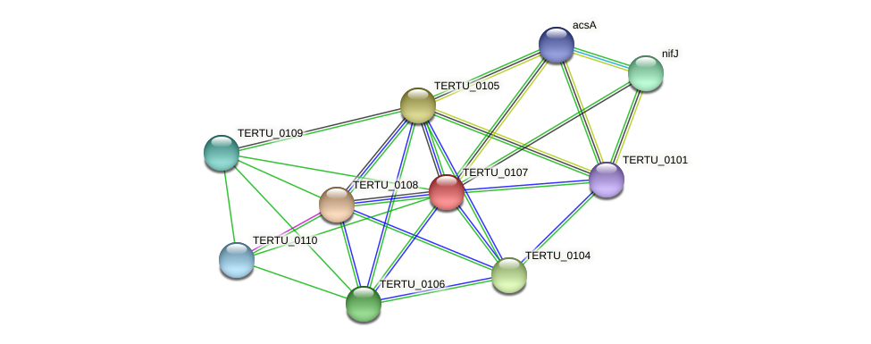 TERTU_0107 protein (Teredinibacter turnerae T7901) - STRING interaction network