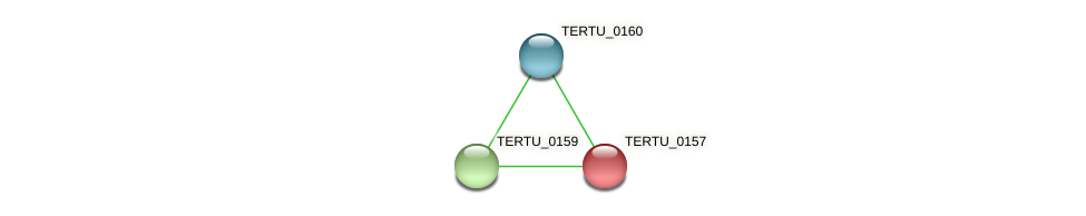 TERTU_0157 protein (Teredinibacter turnerae) - STRING interaction network