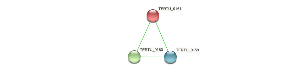 TERTU_0161 protein (Teredinibacter turnerae) - STRING interaction network