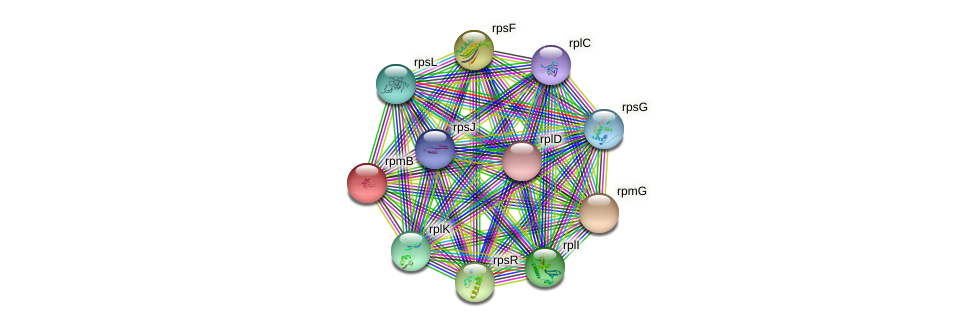 rpmB protein (Teredinibacter turnerae) - STRING interaction network