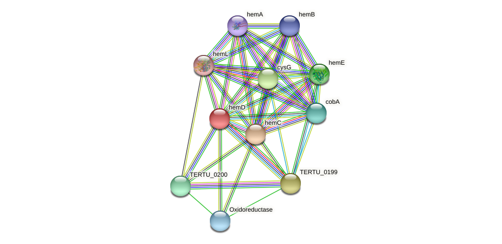 hemD protein (Teredinibacter turnerae) - STRING interaction network