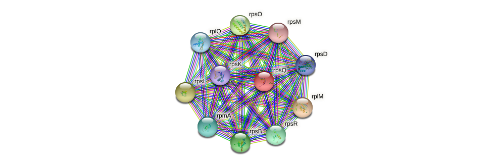 rpsQ protein (Ralstonia eutropha H16) - STRING interaction network
