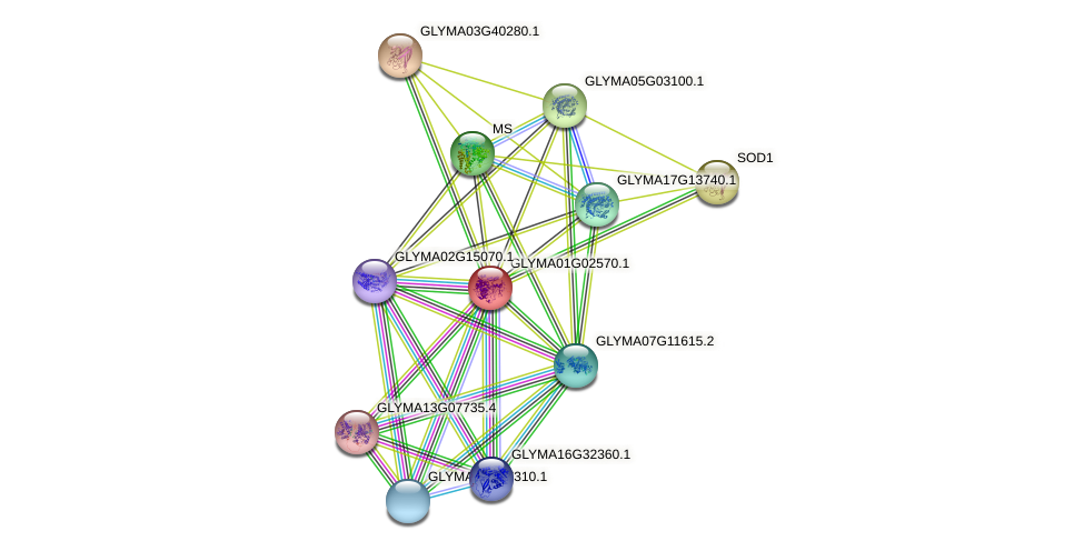 GLYMA01G02570.1 protein (Glycine max) - STRING interaction network
