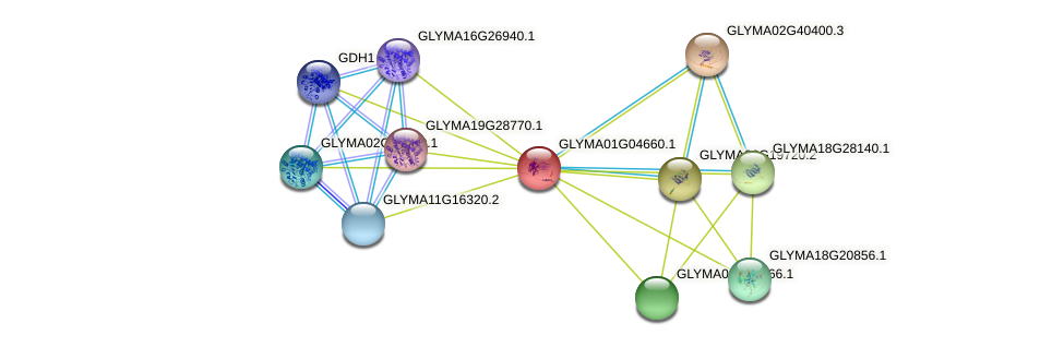 GLYMA01G04660.1 protein (Glycine max) - STRING interaction network