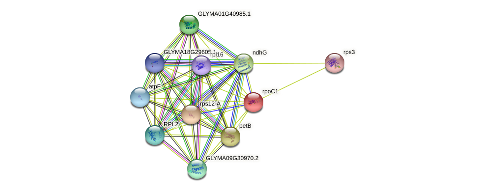 rpoC1 protein (Glycine max) - STRING interaction network