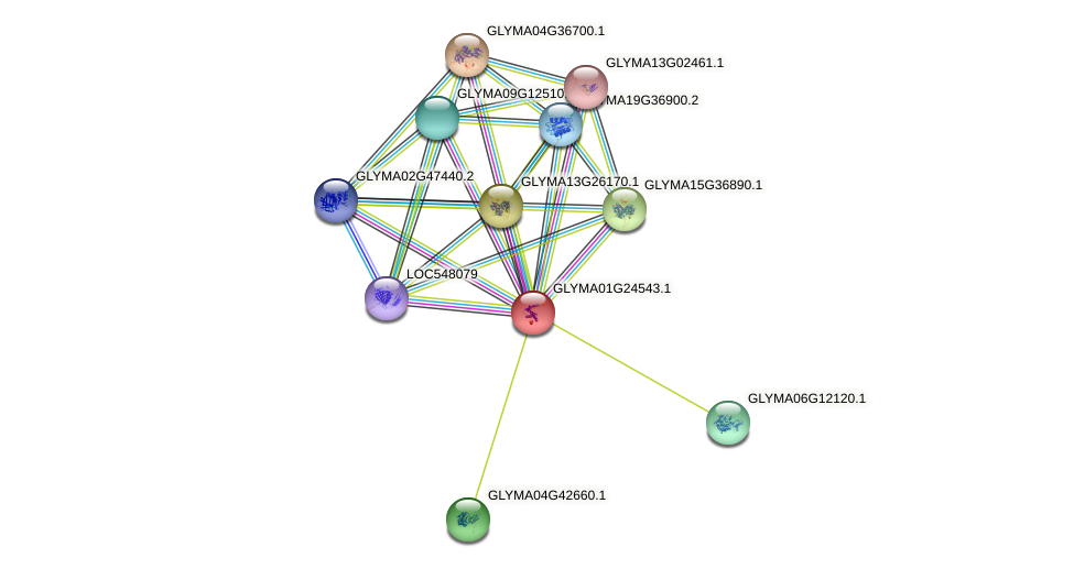 GLYMA01G24543.1 protein (Glycine max) - STRING interaction network
