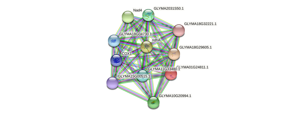 GLYMA01G24811.1 protein (Glycine max) - STRING interaction network