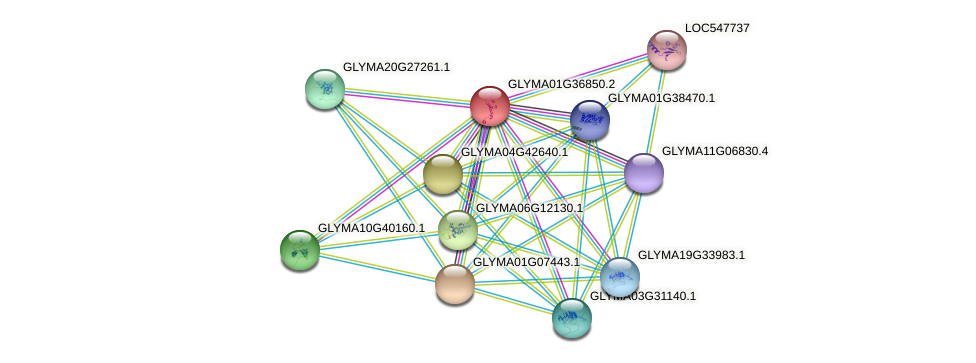 GLYMA01G36850.2 protein (Glycine max) - STRING interaction network