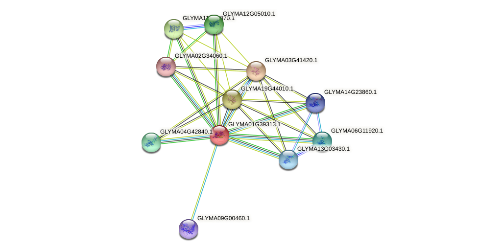 GLYMA01G39313.1 protein (Glycine max) - STRING interaction network