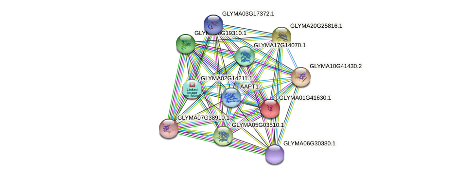GLYMA01G41630.1 protein (Glycine max) - STRING interaction network