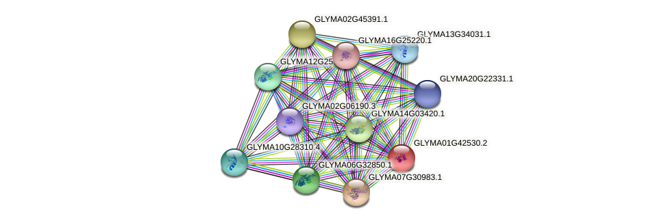 GLYMA01G42530.2 protein (Glycine max) - STRING interaction network