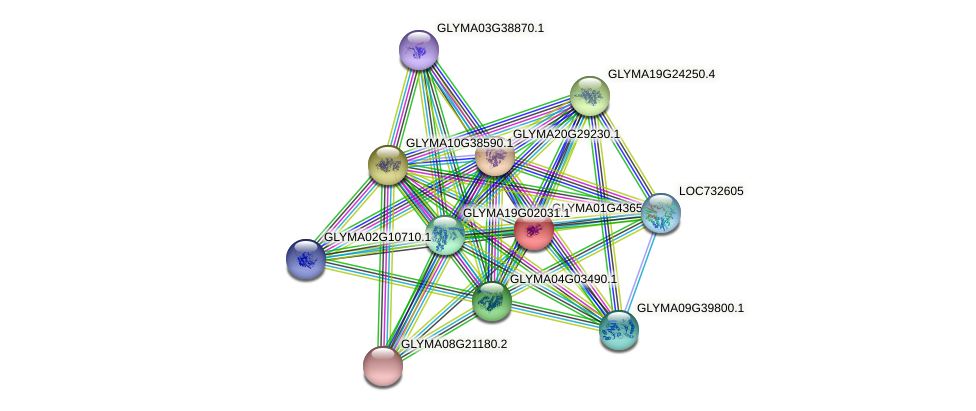 GLYMA01G43650.1 protein (Glycine max) - STRING interaction network