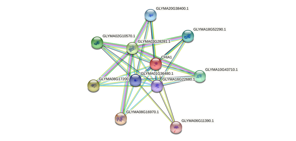 CHIA1 protein (Glycine max) - STRING interaction network