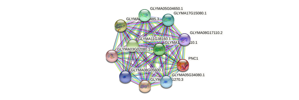 PNC1 protein (Glycine max) - STRING interaction network