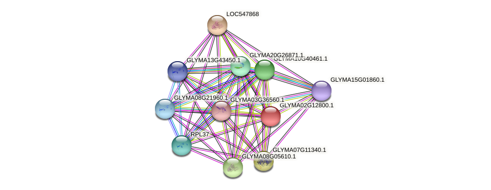 GLYMA02G12800.1 protein (Glycine max) - STRING interaction network