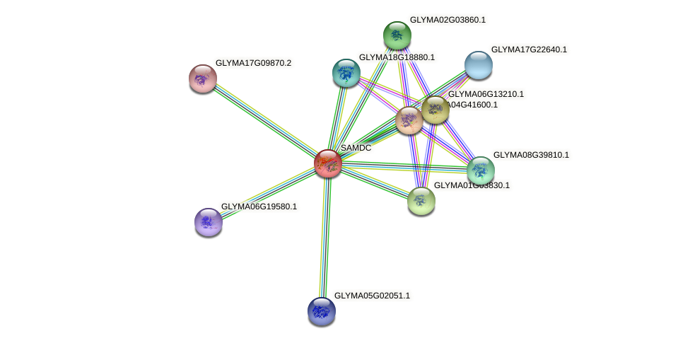 SAMDC protein (Glycine max) - STRING interaction network