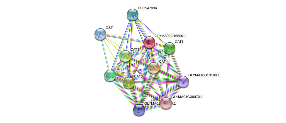 GLYMA02G16800.1 protein (Glycine max) - STRING interaction network