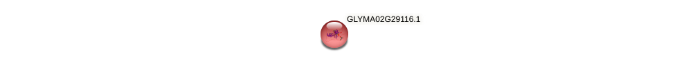 GLYMA02G29116.1 protein (Glycine max) - STRING interaction network