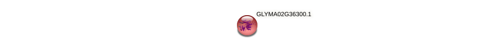 GLYMA02G36300.1 protein (Glycine max) - STRING interaction network