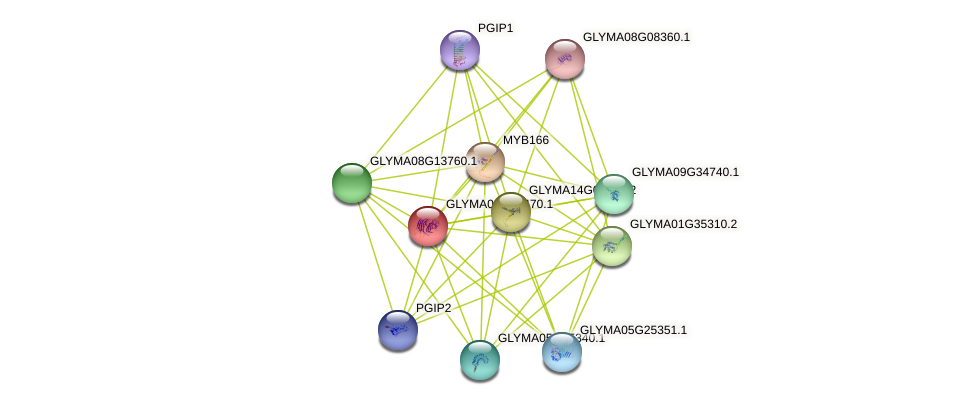 GLYMA02G36470.1 protein (Glycine max) - STRING interaction network